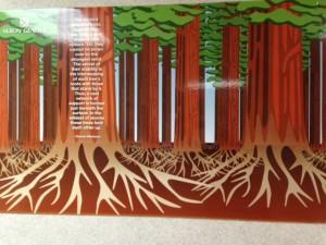 GiantRedwoods (2)