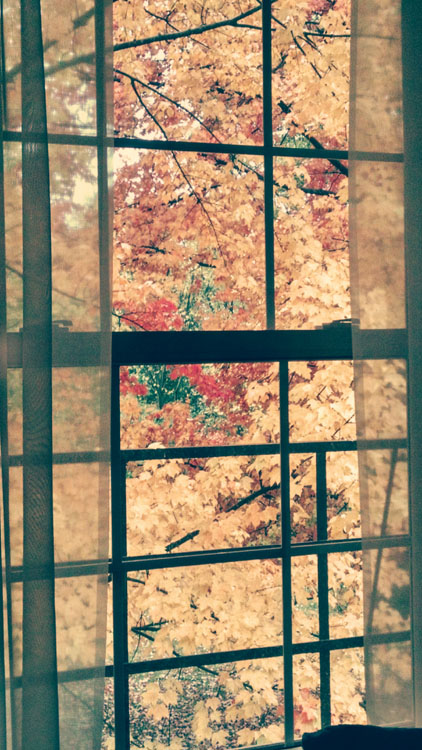autumn-out-my-window